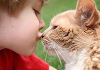 Ребенок, кошка, профилактика лишая