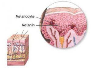 Меланины