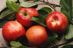 Польза яблок для профилактики инсульта