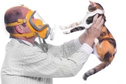 Аллергия на животных - причина бронхиальной астмы