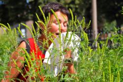 Пыльца амброзии - провокатор бронхиальной астмы экзогенной формы