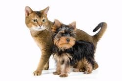 Шерсть животных - провокатор аллергической астмы