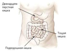 Схема кишечника новорожденного