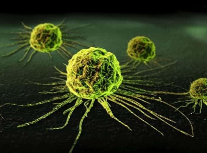 ВПЧ высокого онкогенного риска, что это такое вирус папилломы человека высокого онкогенного риска