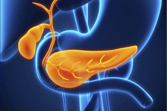 Папиллома желчного пузыря – Лечим печень