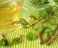 Настойка из березовых листьев и почек