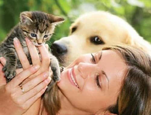 девушка держит в руках котенка