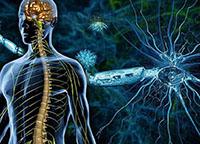 Скелет, мозг, рассеянный склероз