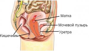Рисунок, женские органы